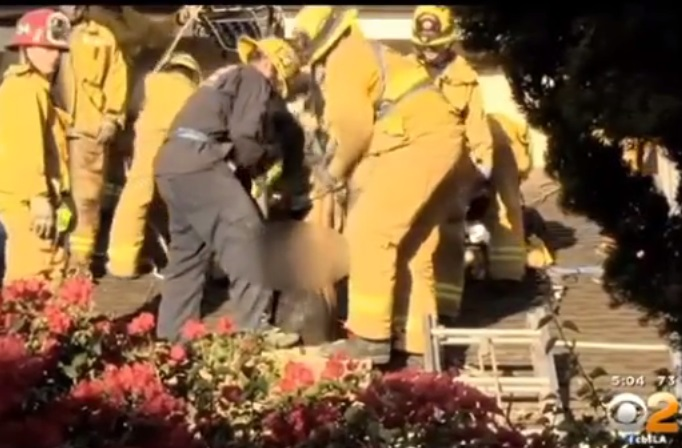 Lady Stuck in Chimney Trying to Enter Mans Home -- NYMag
