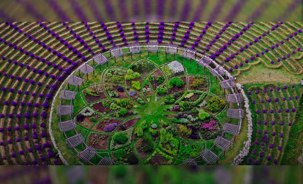 When In Michigan Don T Miss This Lavender Labyrinth
