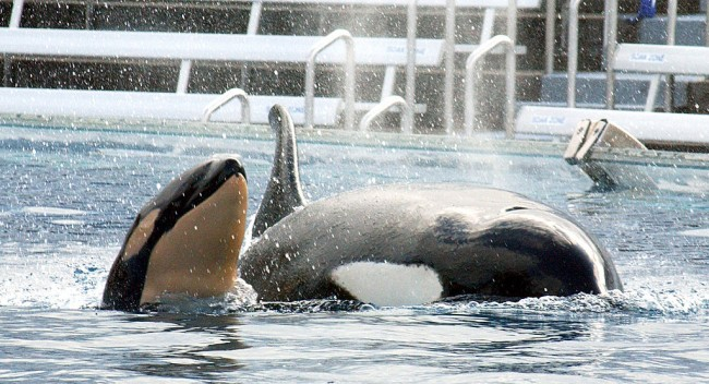 SeaWorld Park Abu Dhabi Opens Without Orcas In 2022, Find ...